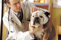 Best US Veterinary Schools