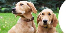 Creature Comforts Veterinary
