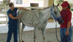 The Pre-Veterinary program