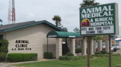 Animal Medical and Surgical