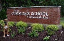 Prestigious Tufts Cummings