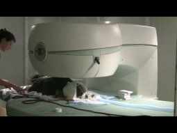 MRI at Upstate Veterinary
