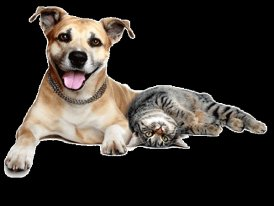 Let us treat your pet like