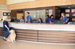 Our VCA Veterinary Specialists