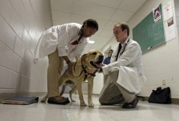 Pacemakers for dogs