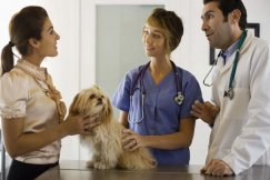 Veterinary technicians listen