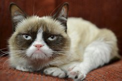 Grumpy Cat is a celebrity