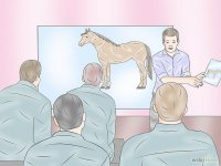 Become a Veterinary Technician Step 4.jpg