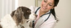 Accredited Veterinary Schools
