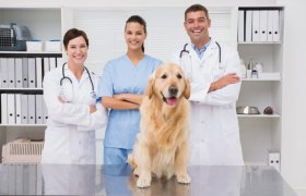 Best Veterinary Schools in U.S