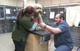 Chicago Veterinary Emergency