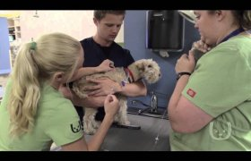 Coon Rapids Animal Hospital