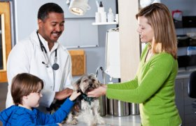Doctor of Veterinary Medicine Schools