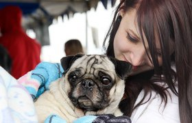 Free Veterinary Care for Dogs