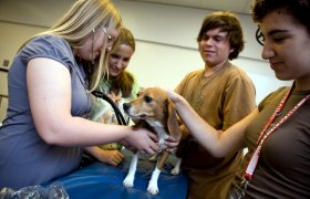 High School Veterinary Programs