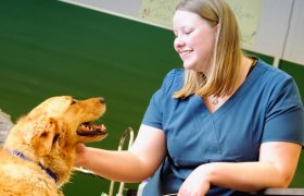Online Courses for Veterinary Technician