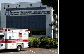 Seattle Veterinary Specialists Kirkland WA