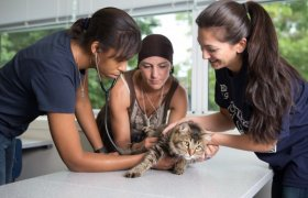 Veterinary colleges in New York