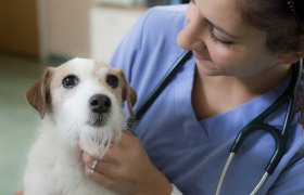Veterinary Courses in College