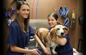 Veterinary Schools in Oklahoma