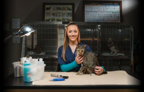 Veterinary Technician Information