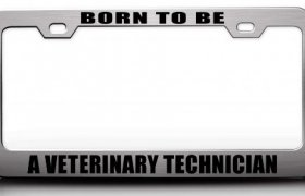 Veterinary Technician License