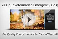 24 Hour Emergency Animal Hospital in Wentzville MO