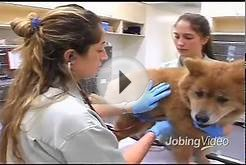 California Veterinary Specialists | Animal Care Jobs In