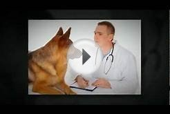 Emergency Vet Scottsdale | Call 480--2771 | Emergency