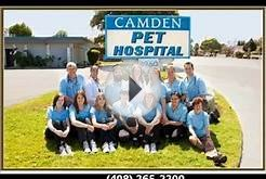 Evergreen Veterinary Clinic Dog Care in San Jose Evergreen