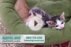 Hanover Green Veterinary Clinic | Veterinary Services in