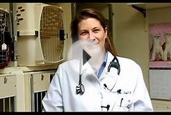 La Jolla Veterinary Hospital | La Jolla San Diego Vets For