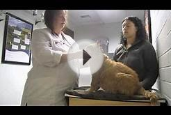 Moose Goes to the Vet, Part 1 - Pilchuck Veterinary Hospital