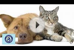 Pearl River Veterinary Hospital Video | Veterinary Service