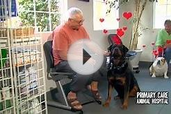Primary Care Animal Hospital Fall in Love HD