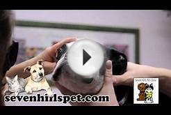 Seven Hills Pet Clinic | Veterinary Services in Loveland