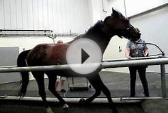 University of Minnesota Equine Center, demonstration of