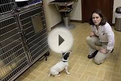 University Veterinary Hospital Shreveport Louisiana - ORAL ATP