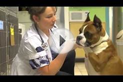Veterinarian In Brooklyn - Oceanside Animal Clinic